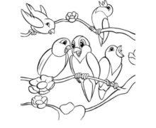 e-kolorowanki, ptaki (1)