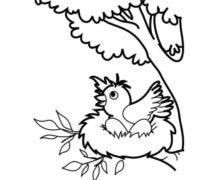 e-kolorowanki, ptaki (2)